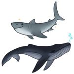 Shark and Whale