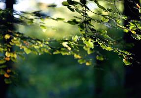 trees by tsigane