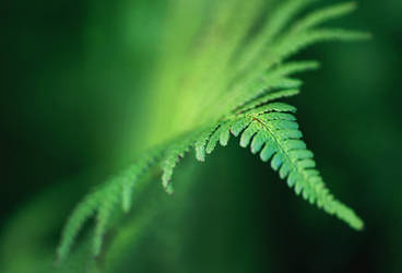 green by tsigane