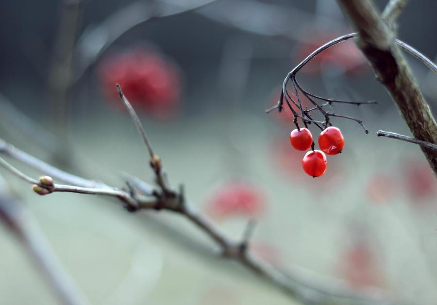 berries by tsigane