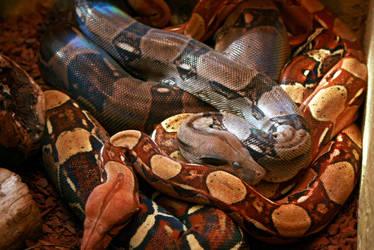 Reptiles3