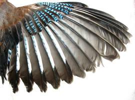 .Wing. by KasStock