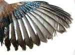 .Wing.