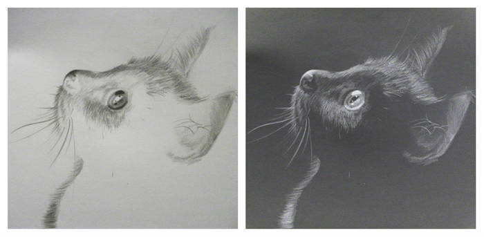 Black Kitten - Colour Invert Drawing