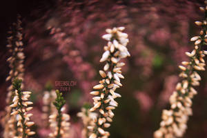 heath transformation with lens by GreenSlOw