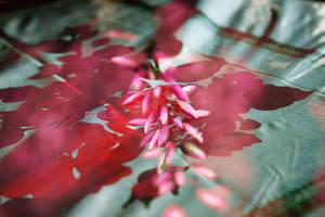 Grandma's flowers by GreenSlOw
