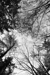 overhead series trees 2 by GreenSlOw