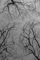 overhead series sky and trees by GreenSlOw