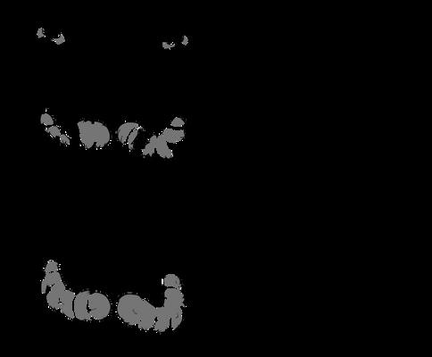 Anthro Raccoon Base