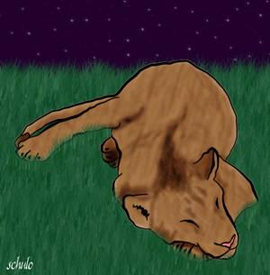The Lioness Sleeps Tonight...