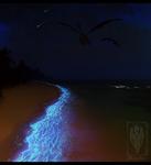 Shimmering shores