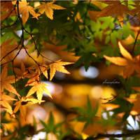 Seasons by glowingkitten