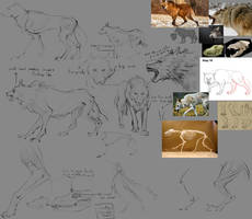 A little study of wolves