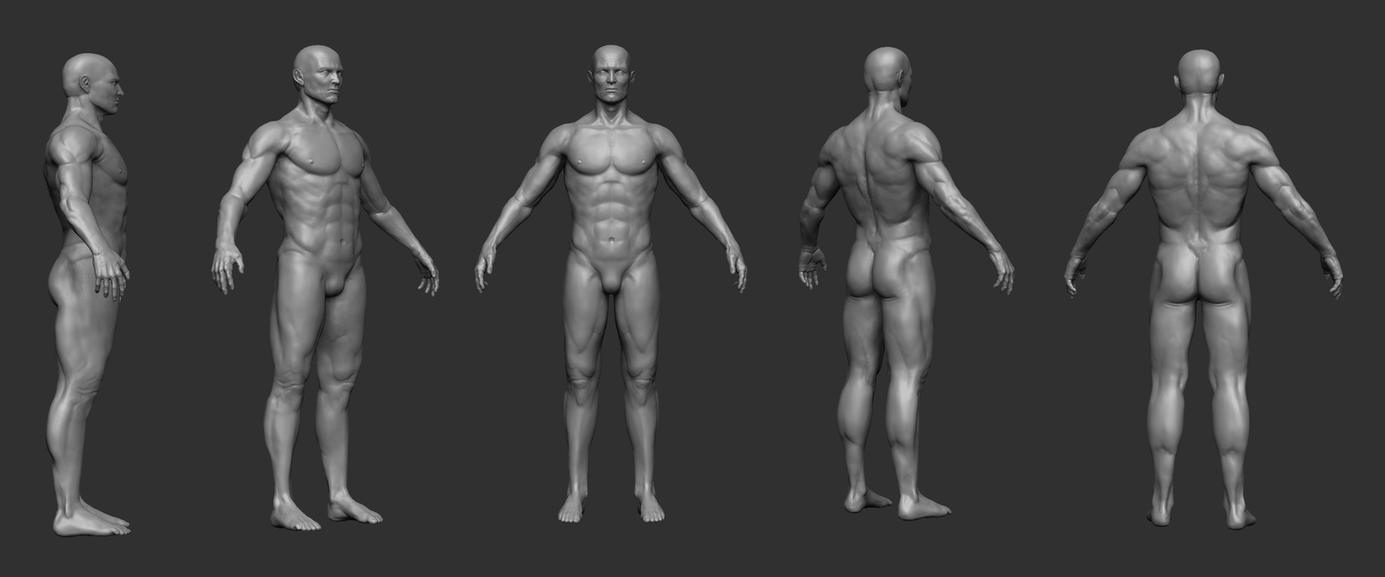 male anatomy study by opengraphics on DeviantArt