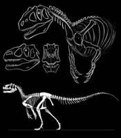 Allosaurus studies by KlaraGibson