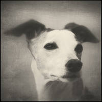 Portrait by JillAuville