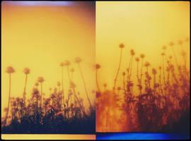 Always The Sun by JillAuville