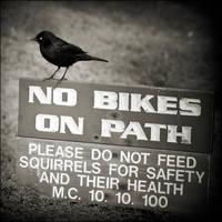 No Bike No Squirrel by JillAuville