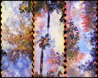 Pastels by JillAuville