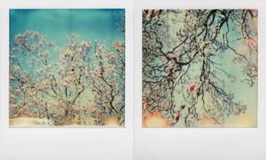 Sunny Magnolia by JillAuville