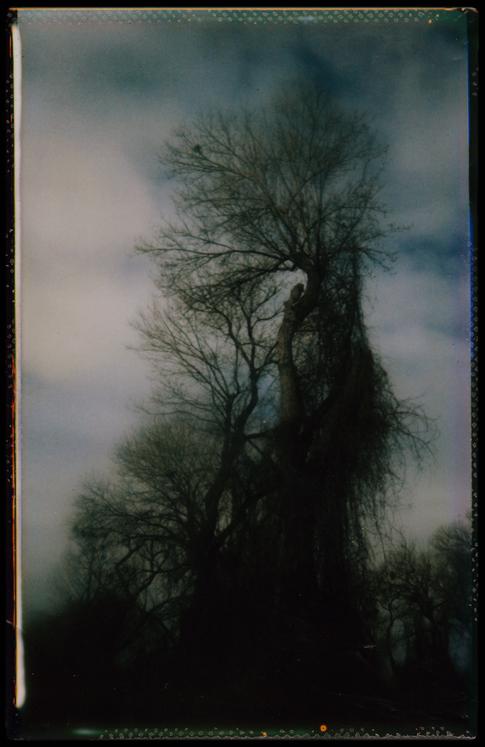 Treebeard by JillAuville