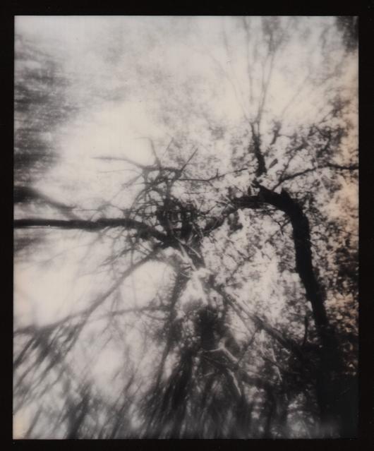 Nest by JillAuville