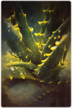 Spines And Droplets