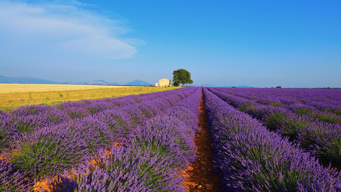 Purple lines II by steveland67