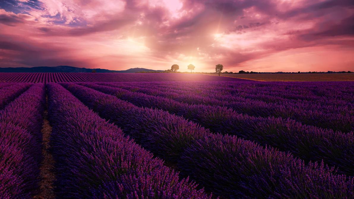 Purple sunset II by steveland67