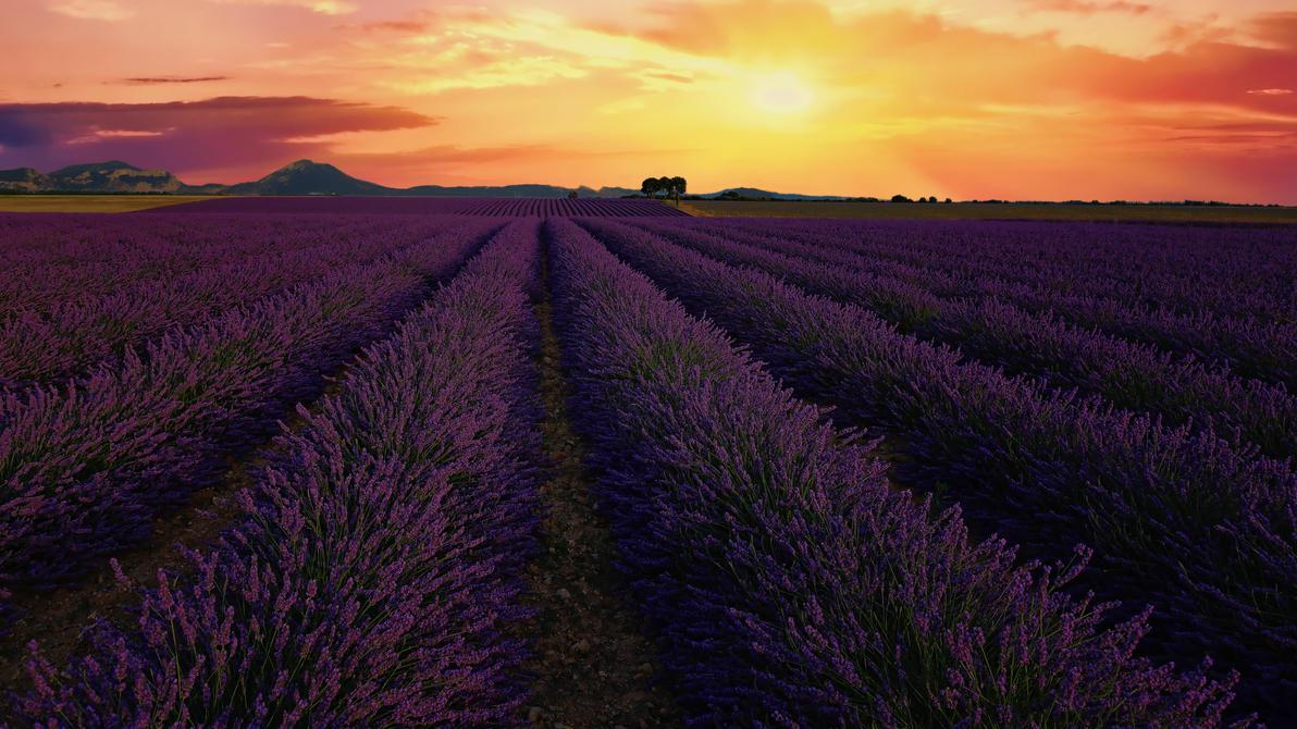 Lavender sunset by steveland67