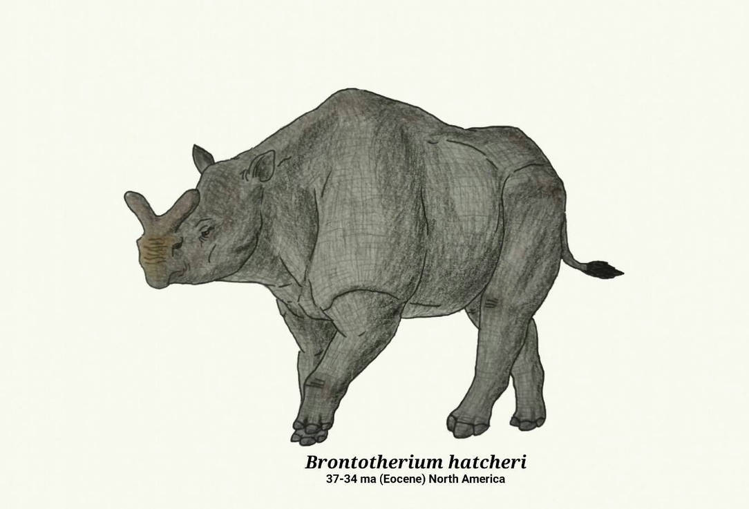 Brontotherium hatcheri by RaresAnimals