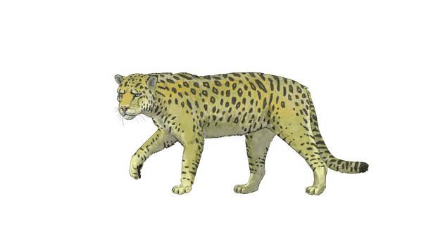Panthera palaeosinensis