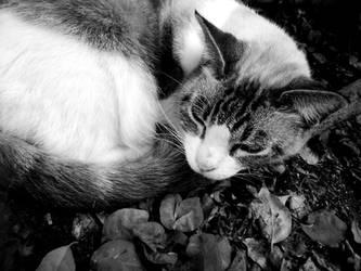 I'm not SLEEPY... by gat0pard0-x0x