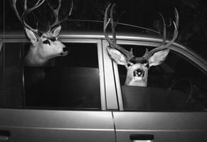 safari '6 by TOYIB