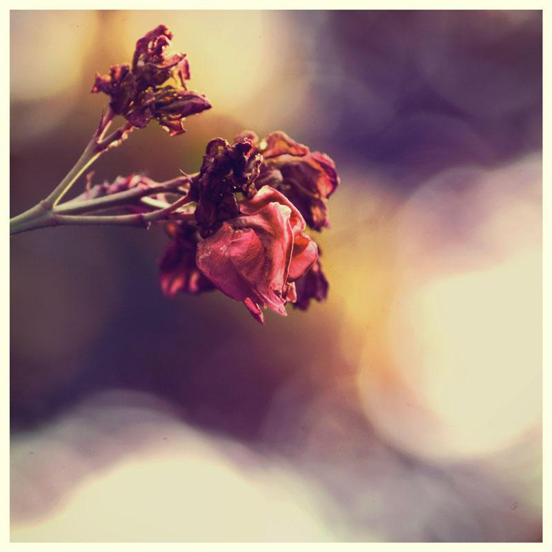 CODA by TOYIB