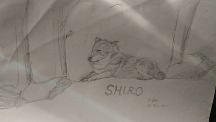 meet my manga wolf Shiro-chan by azureblaze23