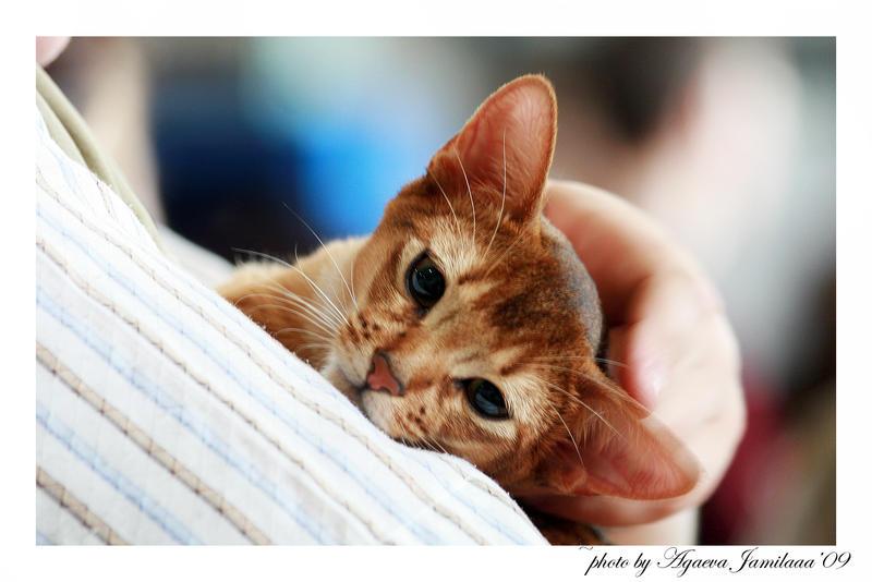 kitty by Jamilaaa