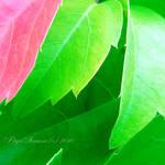 leaves by petyaivanova