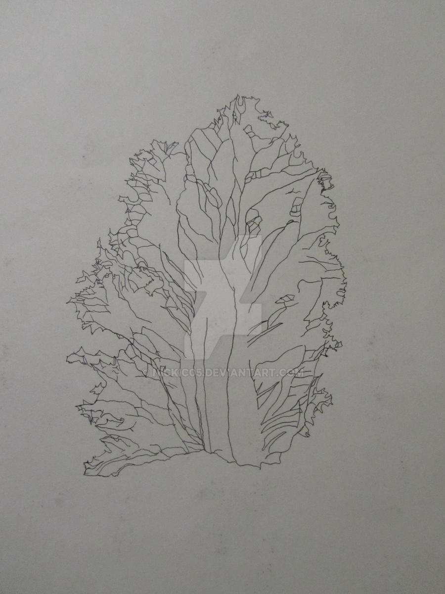 Contour Line Drawing Leaves : Green leaf lettuce contour by nickic on deviantart