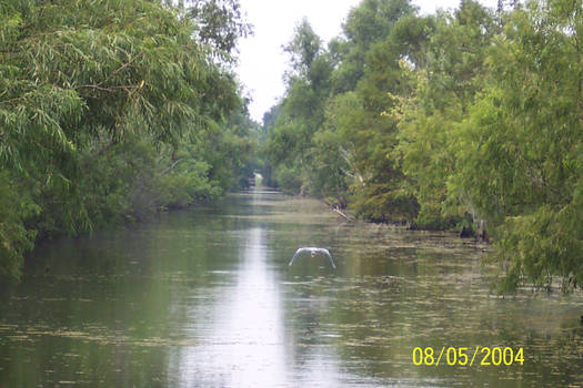 Swamp Channel
