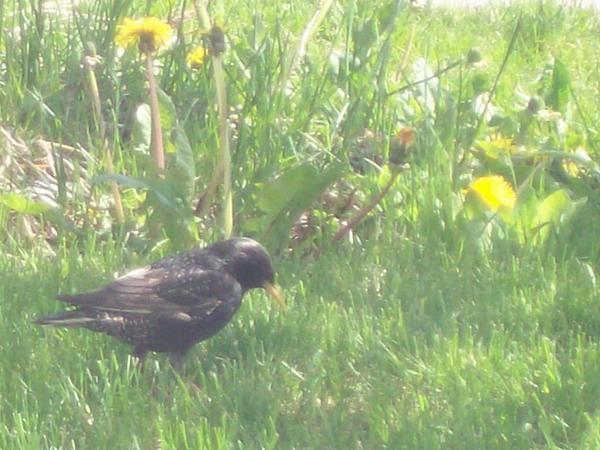 Birdy 001