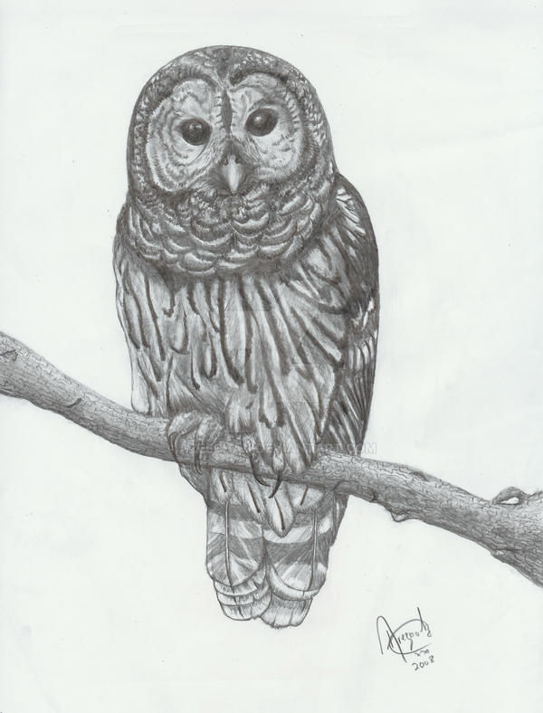 It's just an image of Remarkable Barred Owl Drawing