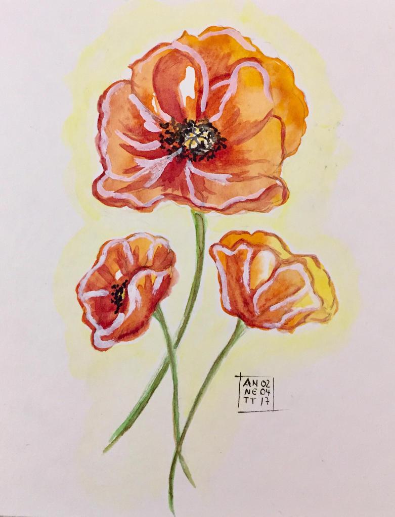 Poppies by 8Annett8