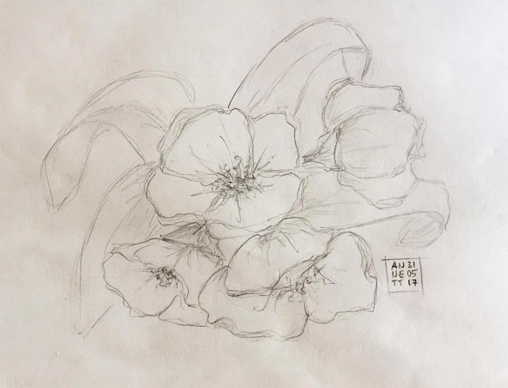 Desktop Sketch 31052017 by 8Annett8