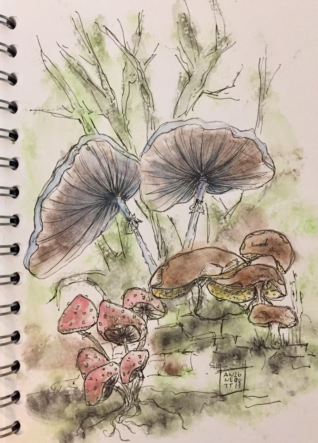 Some mushrooms today... by 8Annett8