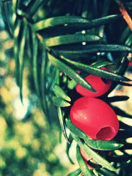 Hidden Holly