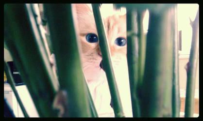 Peek-a-boo by mystique87
