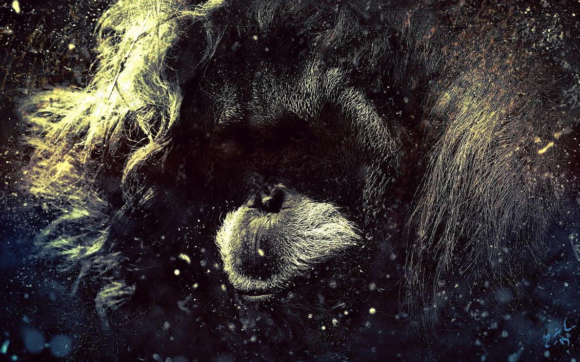 Orangutan by Davage003