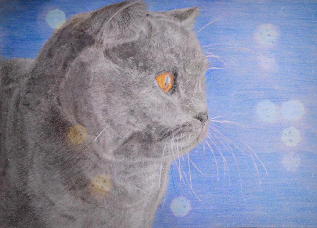 Mr Cat by Mayolika-Das