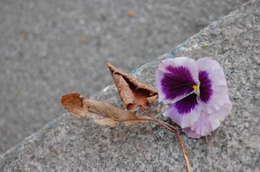 about flowers by zemnaya-nebesnaya